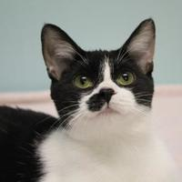 Adopt A Pet :: Gambit - Chicago, IL