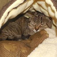 Adopt A Pet :: Faith - Jackson, MI