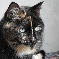 Adopt A Pet :: Bella - Green Bay, WI