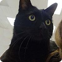 Adopt A Pet :: Parker - N. Billerica, MA