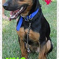 Adopt A Pet :: Uno - Cincinnati, OH