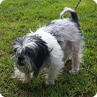 Adopt A Pet :: Hope - Franklin, NH