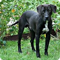 Adopt A Pet :: Tex - Lufkin, TX