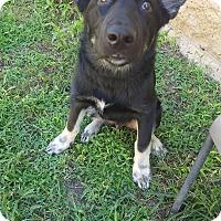 Adopt A Pet :: Vader - Fort Riley, KS