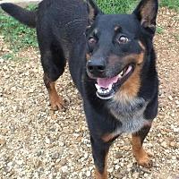 Adopt A Pet :: Rob - Post, TX