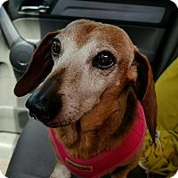 Adopt A Pet :: Rusty - Decatur, GA