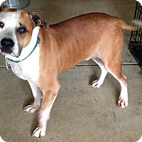 Bulldog Mix Dog for adoption in Crystal Lake, Illinois - Richie