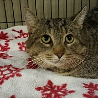 Adopt A Pet :: Yellow - mishawaka, IN