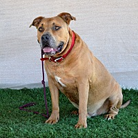 Adopt A Pet :: Rocky aka Big Moe - Palm Springs, CA