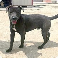Adopt A Pet :: Diego - Marina del Rey, CA