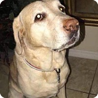 Adopt A Pet :: Brady - Plant City, FL