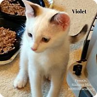 Adopt A Pet :: Violet - Temecula, CA