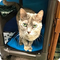 Adopt A Pet :: Princess - Byron Center, MI