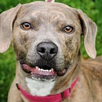 Adopt A Pet :: Mavis - Tyrone, PA