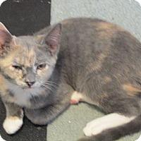 Adopt A Pet :: Fiona - Plattekill, NY