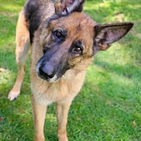 Adopt A Pet :: Axle - Chester Springs, PA