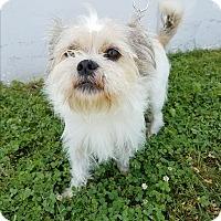 Adopt A Pet :: Bill - Canoga Park, CA