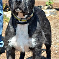 Adopt A Pet :: Edwin - Yreka, CA