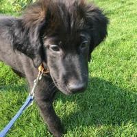 Adopt A Pet :: Lucky R - Saskatoon, SK