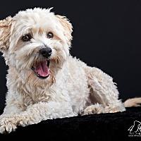 Adopt A Pet :: Brice - Lodi, CA