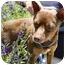 Photo 3 - Miniature Pinscher Mix Dog for adoption in Berkeley, California - Reese