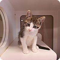 Adopt A Pet :: Gio - Maywood, NJ