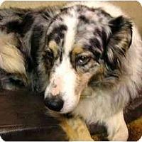 Adopt A Pet :: Sassy - Orlando, FL