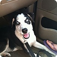 Adopt A Pet :: Titan - Shirley, NY