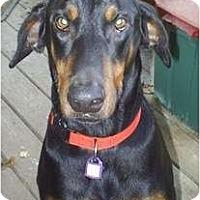 Adopt A Pet :: Max - cedar grove, IN