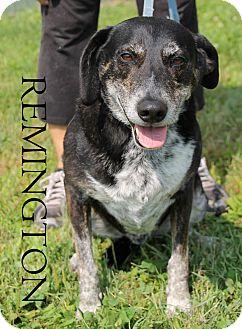 Mountain Cur Mix Dog for adoption in Hibbing, Minnesota - REMMINGTON