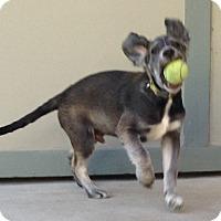 Adopt A Pet :: Sharkey - sweet, adorable pup! - Los Angeles, CA