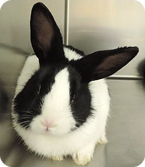 American Mix for adoption in Sioux City, Iowa - BUNBUN