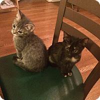 Adopt A Pet :: Halstead - Chicago, IL