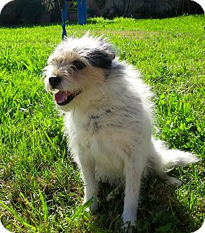 Jack Russell Terrier Mix Dog for adoption in Los Angeles, California - Duchess