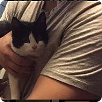 Adopt A Pet :: Squirt - Edmonton, AB