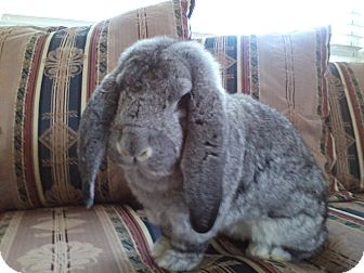 Lop, French for adoption in Watauga, Texas - Theodore