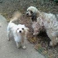 Adopt A Pet :: Bridgette - Alpharetta, GA