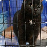Adopt A Pet :: Butter - Westfield, MA