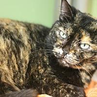 Adopt A Pet :: Mona - Canoga Park, CA