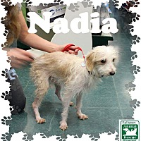 Adopt A Pet :: Nadia - Fallston, MD