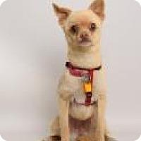 Adopt A Pet :: Noodle - Santa Cruz, CA