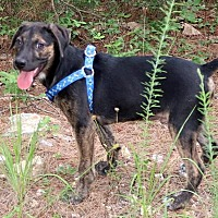 Adopt A Pet :: Ferris - Allentown, PA
