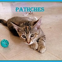 Adopt A Pet :: Patches - Berkeley Springs, WV