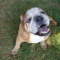 Adopt A Pet :: Meatball - Santa Ana, CA