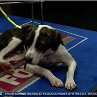 Adopt A Pet :: Huckleberry - Troutville, VA