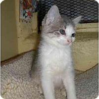 Adopt A Pet :: Miss Waldo - Lombard, IL
