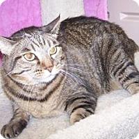 Adopt A Pet :: K-Amy3-Zoey - Colorado Springs, CO