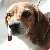 Adopt A Pet :: Barney - Canoga Park, CA