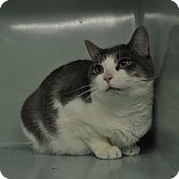 Adopt A Pet :: Georgine - Rockaway, NJ