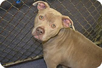 Terrier (Unknown Type, Medium) Mix Dog for adoption in Edwardsville, Illinois - Tammy